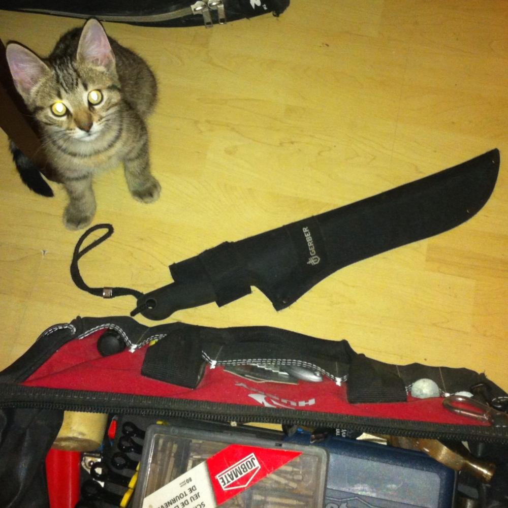 Machete kitty